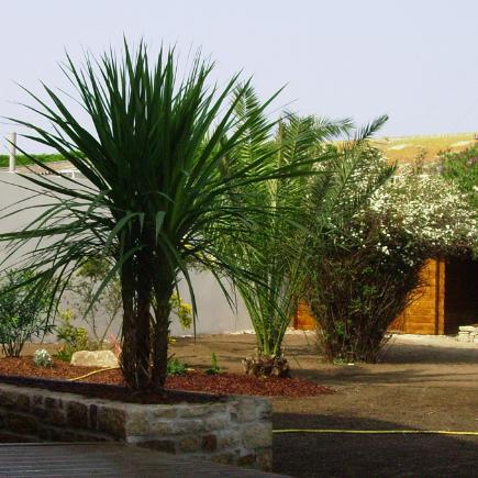 palmiers-presentation